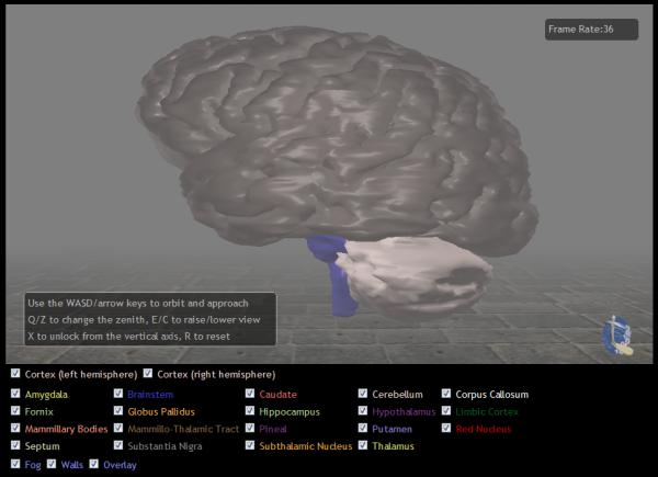 Livingston Brain Data